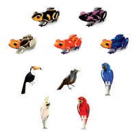 Set of brazil frogs and birds