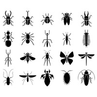 Silhouette of insects