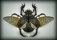 Zentangle styled insect