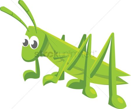 插图剪贴画 : A grasshopper on white background