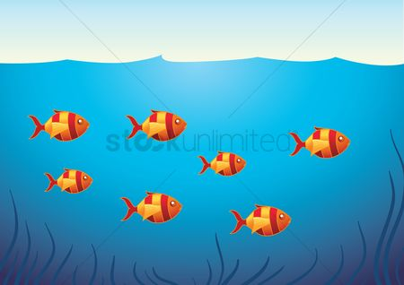 学校 : A school of fish