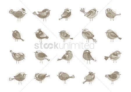 搜藏 : Collection of birds