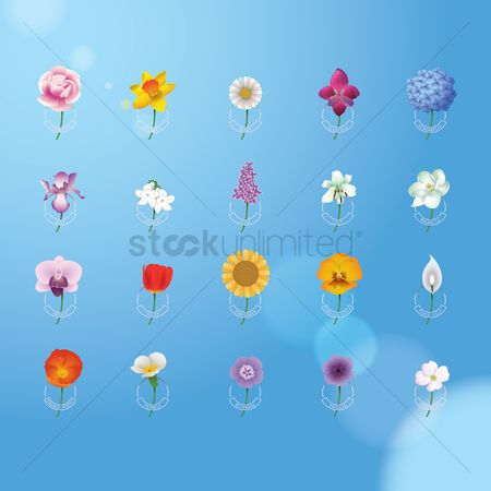花 : Collection of flowers