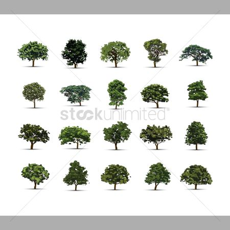 环境 : Collection of trees