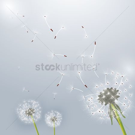 花 : Dandelion flower design