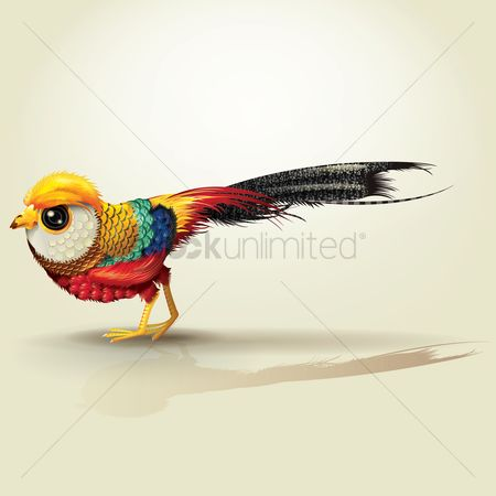鸟类 : Golden pheasant bird