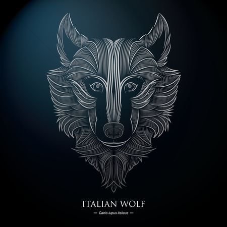 动物野生动物 : Italian wolf background