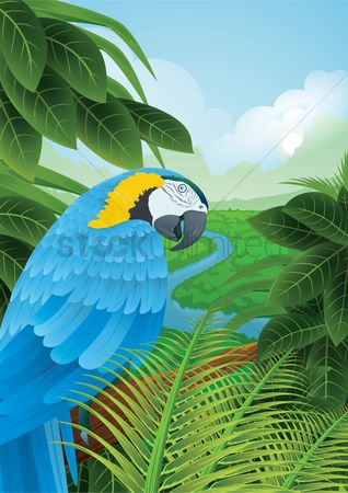 鸟类 : Parrot in a rainforest
