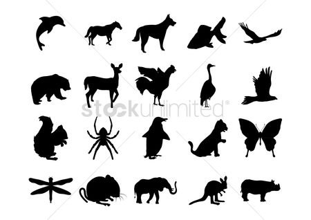 鸟类 : Set of animal silhouettes