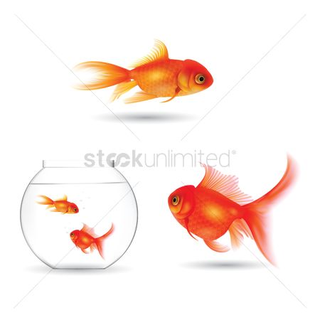 水 : Set of goldfish