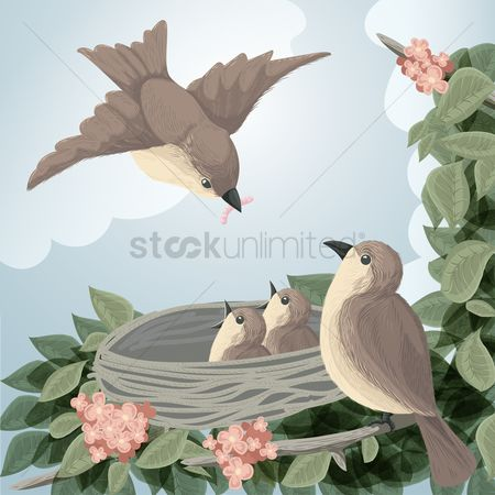 鸟类 : Sparrows in the nest