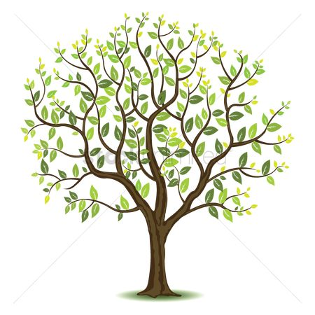 环境 : Tree with green leaves
