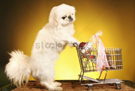 购物 : Dog pushing shopping cart